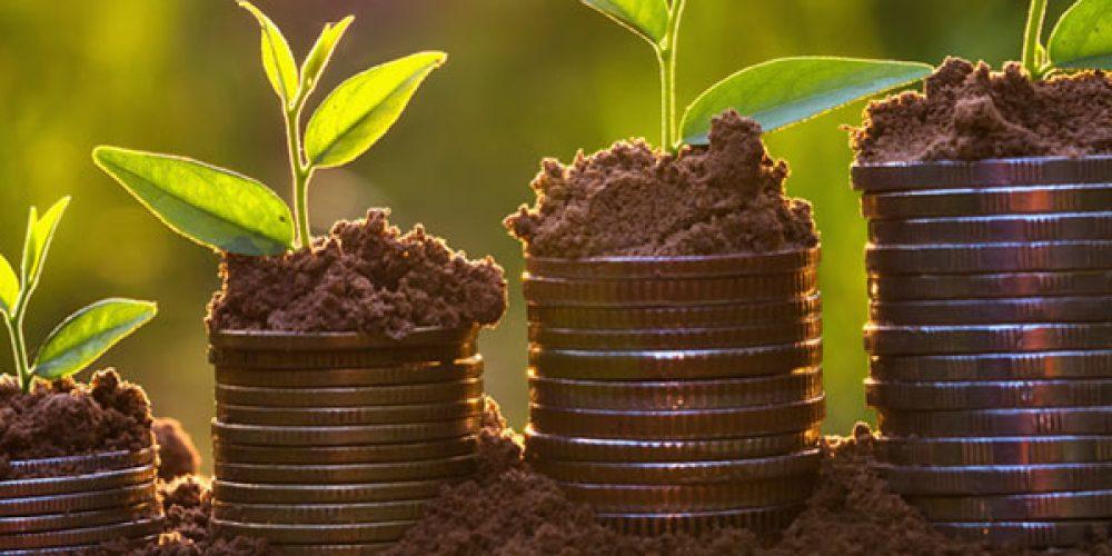 Guide pour investir dans un groupement forestier